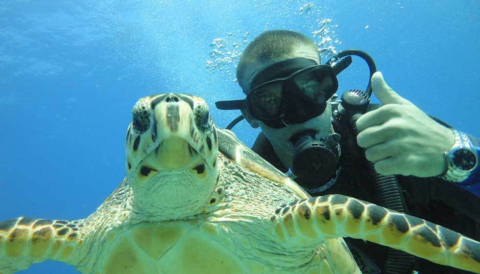 Picture of scuba diving in cancun with a turtle